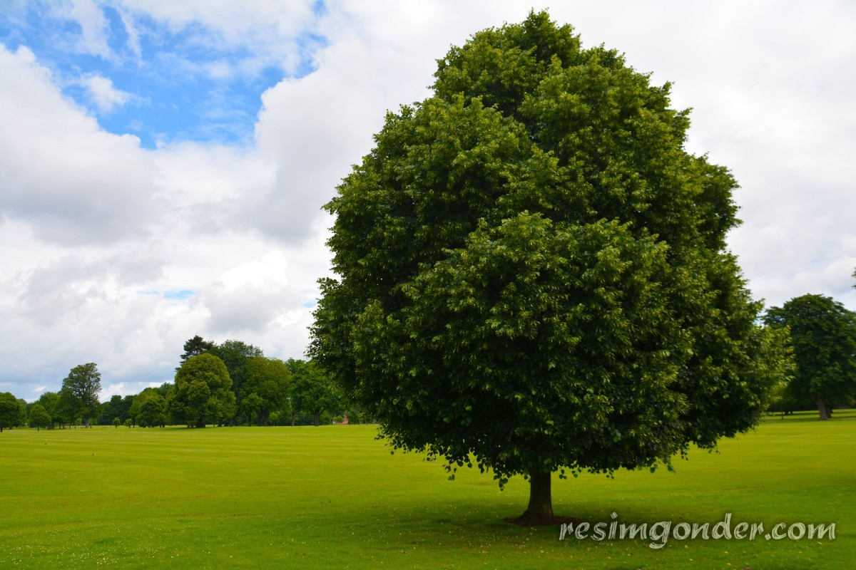[Resim: tree_park_grass_green_nature_forest_envi...4.jpgd.jpg]